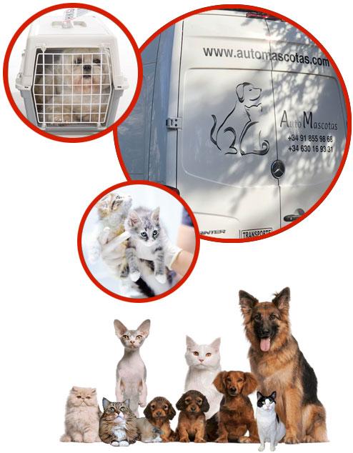 Cómo Elegir La Empresa Que Transporte A Tus Mascotas